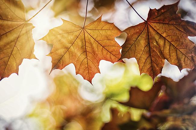 Het is weer herfst. Let extra goed op in het verkeer
